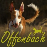 SOFA Dog Wear - 13. -14. 6.  Offenabch am Main