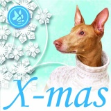 SOFA Dog Wear - X-mas events 2018