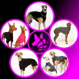 SOFA Dog Wear - Underwear days at SDW
