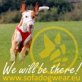 SOFA Dog Wear - Coursing Spring