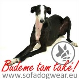 SOFA Dog Wear - The Spring meeting of adopted greyhounds 2014
