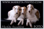 SOFA Dog Wear - http://marketa-photo.com